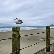 Snapseed_Final-2-Gull-Beach-DSC04019