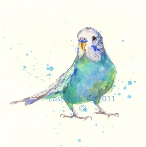 Parakeet_il_