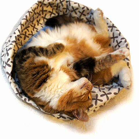 Final-Peyeton-Curled