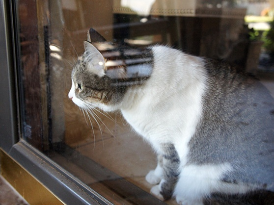Final-Lucy-Window-DSC04229-