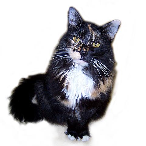 Final-Miss-Big-Kitty-3
