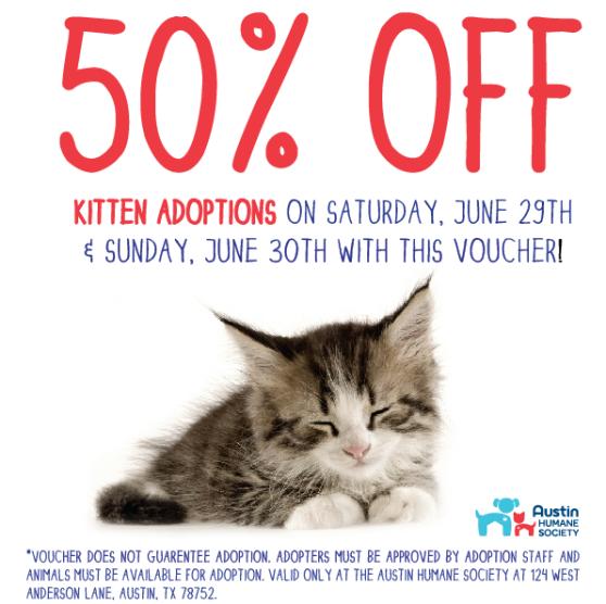 Kitten Adopt-971496_10151667182048396_1740144240_n