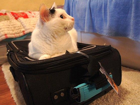 Final-Binx-Suitcase-DSC0505