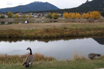 Geese on Estes Lake