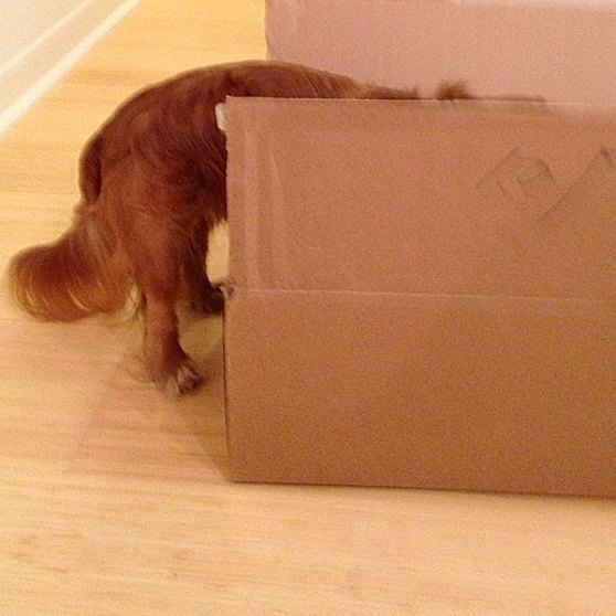 Final-Box-1