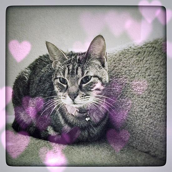 Caska-Valentine
