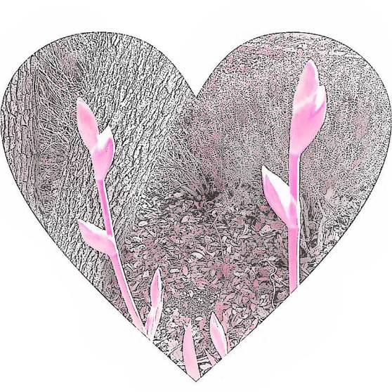 Final-Pink-Iris